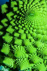 stock photo of romanesco  - Romanesco broccoli Twist - JPG