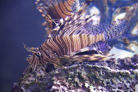 image of butterfly fish  - Close - JPG