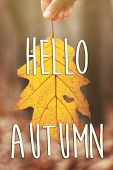 Hello Autumn Fall Text Sign On Hand Holding Beautiful Yellow Autumn Leaf With Heart Shaped Hole In A poster