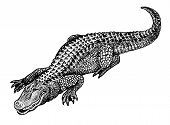 picture of stippling  - Stippled black and white drawing of a fat happy alligator - JPG
