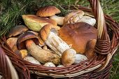 Detail Of Wicker Basket With Edible Mushrooms poster