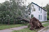 Tree Uprooted After Storm