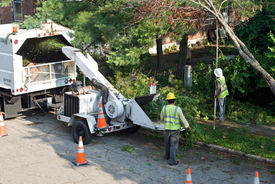 picture of arborist  - Tree Trimmers - JPG