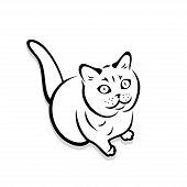British Shorthair Cat - Vector Illustration - Vector poster