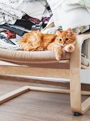 Cute Ginger Cat Lying On A Chair. Mess In Room, Outfits Stacked In Disorder. Furry Pet Looks With Cu poster