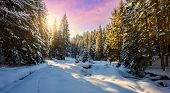 Majestic Winter Landscape. Frosty Pine Tree Under Sunlight At Sunset. Christmas Holiday Concept, Unu poster