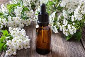 A Bottle Of Homemade Herbal Tincture With Blooming Hawthorn Branches poster