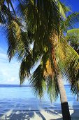 image of dhoni  - Tropical beach on Maldives in the Indian Ocean - JPG