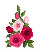 Branch of red and pink roses, buds and leaves. Vector illustration.