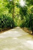 pic of tree lined street  - Street with green trees in the park - JPG