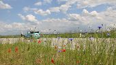 image of beetle car  - beetle oldtimer on the way country roadside with red poppy and corn flowers - JPG