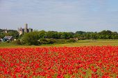 Poppy Field At Warkworth