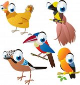 picture of bird paradise  - vector isolated cartoon cute animals set - JPG