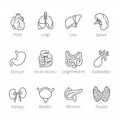stock photo of flat stomach  - Vector icon set of human internal organs like heart spleen lungs stomach thyroid intestine bladder gallbladder pancreas kidneys and liver in flat countur style - JPG