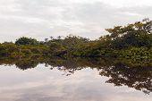 picture of jungle  - Sunset in Amazon jungle - JPG