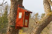 pic of tree house  - Bird house in a tree painted as a traditional country house - JPG