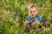 stock photo of tall grass  - Beautiful blue - JPG
