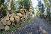 picture of piles  - Forest managment A pile of felled trees - JPG
