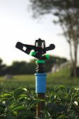 stock photo of sprinkler  - Sprinkler for watering for tea plantation in Thailand - JPG