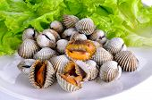 picture of cockle shell  - Boiled cockles with lettuce in the dish  - JPG