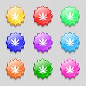 pic of cannabis  - Cannabis leaf icon sign - JPG