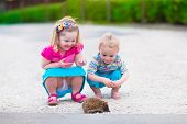 stock photo of baby animal  - Kids playing with a hedgehog - JPG