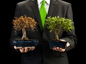 stock photo of bonsai  - businessman holding dead and alive bonsai trees Environment and ecology conceptual image - JPG