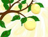 Постер, плакат: Лимонное дерево