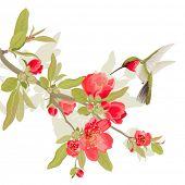 image of colibri  - Card with sakura blossom and colibri - JPG