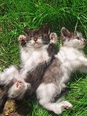 Cats Playing In Garden Together poster