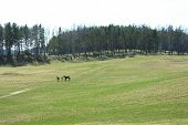 foto of horse plowing  - field with a footpath on which are two men with horses - JPG