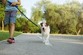 Dog And Little Child Walking At The Park. Obedience And Friendship Concept. poster