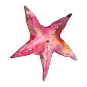 Summer Beach Starfish Tropical Elements. Watercolor Background Set. Isolated Starfish Illustration E poster