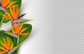 Transparent Bird Of Paradise Flower Background. Tropical Summer Season Floral Design In 3d Style Wit poster