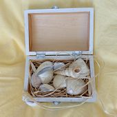 Seashells in a box