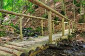 Wooden Bridge Disappears In Forest