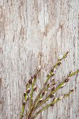 Easter Decoration With Catkins On Old Wood