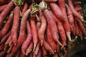 stock photo of ipomoea  - Sweet Potatoes  - JPG
