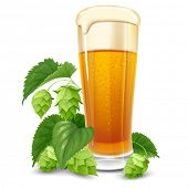 image of hop-plant  - Glass of beer and hops isolated on white background - JPG