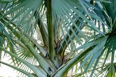 picture of monocots  - A beautiful pattern of palm tree leave - JPG