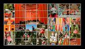 image of inari  - Collection of Fushimi Inari Taisha Shrine scenics in TV wall - JPG