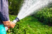 foto of gushing  - men hand watering the plants - JPG
