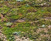 stock photo of rotten  - Old green mossy rotten wood background texture - JPG