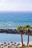 pic of canary  - View of Playa la Pinta in city Costa Adeje Tenerife Canary Islands Spain.