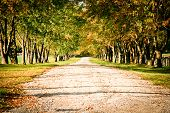 stock photo of canopy  - Fall path with a tree canopy leading into the distance - JPG