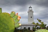 picture of mola  - La Mola lighthouse Formentera nopal chumbera plants foreground - JPG
