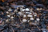 picture of shroom  - Small shrooms on a dark forest floor - JPG