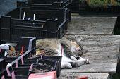 image of kitty  - Sleepy kitty taking a rest in the sun  - JPG