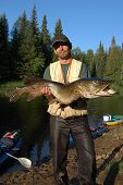 stock photo of fisherman  - Fisherman holds a huge pike on the bank of the taiga river - JPG