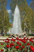 picture of fountain grass  - Tulips and fountain in Zrinjevac park in Zagreb Croatia - JPG